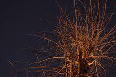 a starlit night