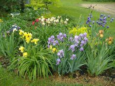 Thread in the Irises forum forum by Henhouse: I love combining plants. Garden Landscape Design, Garden Landscaping, Lily Garden, Peonies Garden, Flowers Garden, Outdoor Flowers, Different Plants, Iris Flowers, Plant Species