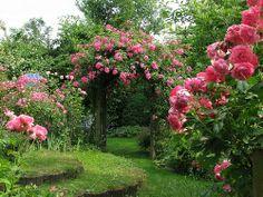 Días de rosas: Paisajismo con rosas
