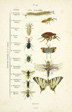 insekten illustration pinterest insekten k fer und tier. Black Bedroom Furniture Sets. Home Design Ideas