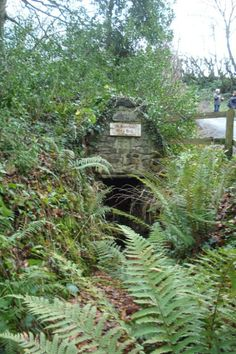 St Swithins Holy Well, Launcells, Cornwall