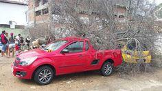 NONATO NOTÍCIAS: Árvore cai sobre veículos no centro de Jacobina