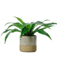 In a contemporary design, the Sienna Pot Range comes in hanging and flat pots to mix and match around the home. Home Republic, Damon, Potted Plants, Contemporary Design, Concept, Brown, Pot Plants, Modern Design, Container Garden