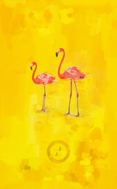 Flamants Roses by Jean Maurice Damour