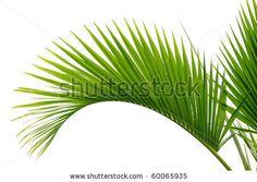 stock photo : Palm tree leaf
