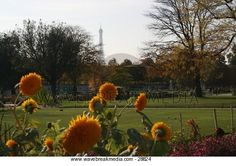 Flowers in a park Image by Wavebreak Media