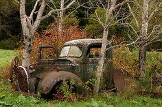 Abandoned Tree Struck