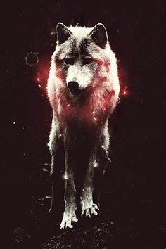 Imagem de wolf, hipster, and wallpaper