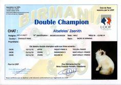 Double champion de France Zeenith   http://des-sacres-d-hangoon.e-monsite.com