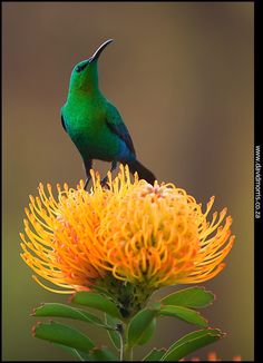 Small Birds, Colorful Birds, Pretty Birds, Beautiful Birds, Beautiful Wife, South African Birds, Weird Plants, Ocean Creatures, All Nature