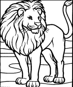 Coloring Pages Male Lion Page Colouring Sheet