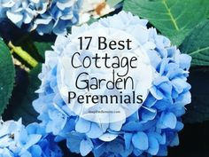 17 Best Cottage Garden Perennials