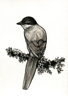 #bird #black and white #drawing #art #nature #tattoo #design