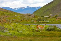 he Road To Torres del Paine National Park