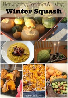 Harvesting, Storing, and Using Winter Squash is relatively easy and fall is a great time to take advantage of homegrown or store-purchased winter squash.