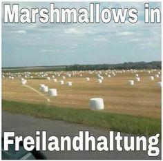 Freilandhaltung #derneuemann #humor #lustig #spaß