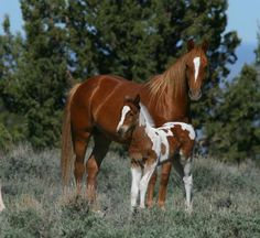 Free Desktop Wallpapers And Backgrounds With Beautiful Horses Cool Picture