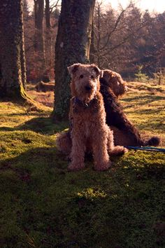 Must love Airedales. PlanetAiredale.com