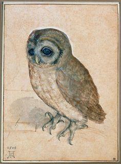 """""""owl"""" by albrecht duerer"""