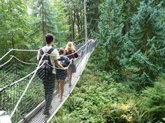 Getting your tree legs at B.C.'s Greenheart Canopy walkway - NBC News.com