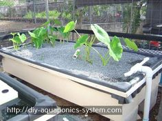 aquaponicssystempdf #poledancingclassesdc   Aquaponics System Pdf