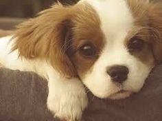 【もふもふ注意】見たら骨抜きにされてしまう可愛い犬画像 2013 - NAVER まとめ