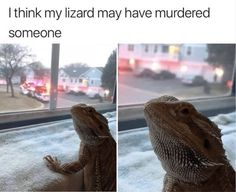 Funny Animal Meme Pictures That Make You Cry With Laughter - 27 Funny Animal Quotes, Animal Jokes, Funny Animal Pictures, Meme Pictures, Animal Captions, Cute Little Animals, Cute Funny Animals, Funny Cute, Hilarious