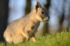 Type 1, Theater, Nature Photography, Facebook, Baby, Photos, Animals, Pictures, Animales