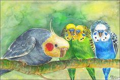 96 Besten Pictures Animals Bilder Auf Pinterest Parakeets Animal