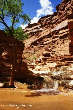 I'm excited to bring to you another amazing secret hike in a National Park! This secret hike in Capitol Reef is one of the most fun hikes you will ever do.