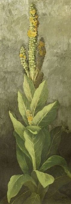 ~ Ellen Robbins-Plant with Yellow Blossoms