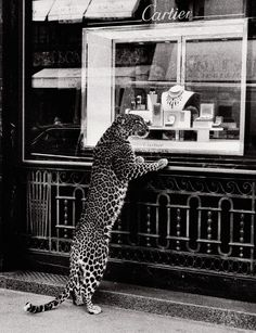 Who doesn't love window shopping in Paris?      photo Jean Larivière for Cartier