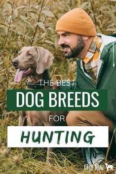 5cca74d29ef82 Best Dog Brees For Hunting: Hounds, Pointers & Retrievers. Thinking about a  new hunting companion? Great Open Outdoors