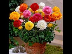 Winter Flowers Care & Tips | Dahlia | Petunia | Salvia flower |Chrysanthemum // Mammal Bonsai - YouTube
