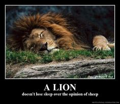 lions don't lose sleep over the opinions of sheep - Google Search