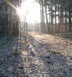 Es gibt nichts schöneres.. morgens allein mit Hund im Wald nach Sonnenaufgang
