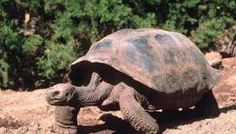 Image result for baby turtle