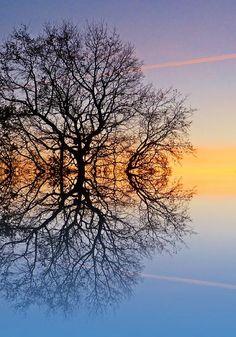 Radici e  diramazioni sono lo specchio uno dell'altro, questo è il motivo per cui vanno verso fronti opposti pur partendo dalle stesse condizioni. Le radici danno la saggezza, ricerca lì l'anima che hai. Alle discendenza donagli l'anima trovata.