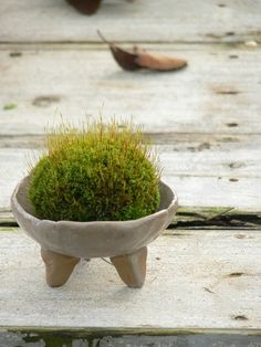 cute pot. nice plant. would work any where but look gd on a porch or patio or in a window.