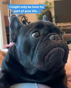 Cute Funny Animals, Cute Baby Animals, Funny Cute, Cute Bulldogs, Funny French Bulldogs, Cute Animal Videos, Funny Animal Pictures, Funny Dog Videos, Funny Dogs