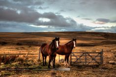 Pretty horses at Chilean-Argentinian border in Patagonia