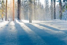 winter sunlight through a snowy forest