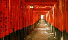 Gates tunnel, Inari Shrine, Kyoto (Dreamstime)