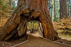Fascinating Ways People Try to Leave Their Mark on the World | Tree Tunnel. Calaveras Big Trees State Park, California.  David Gardner  | WIRED.com