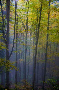Bavaria Forest