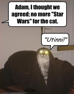 "Adam, I thought we agreed; no more ""Star Wars"" for the cat. #catoftheday"