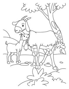 Goat And Kid Coloring Page