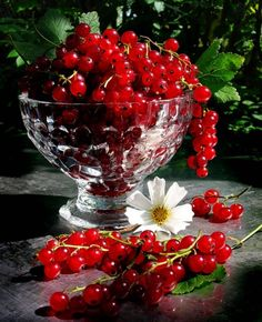fruit and vegetable gifs Beautiful Fruits, Beautiful Flowers, Currant Berry, Fruit Photography, Garden Fountains, Fruit Art, Shades Of Red, Fruits And Vegetables, Fresh Fruit