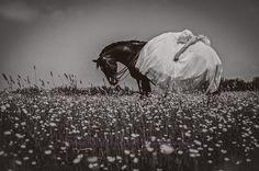 www.pegasebuzz.com | Equine Photography : Sue Westwood-Ruttledge