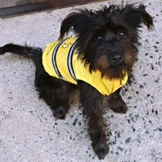 Royal Animals, Dog Raincoat, Pet Clothes, Your Dog, Yellow, Pets, Animals And Pets